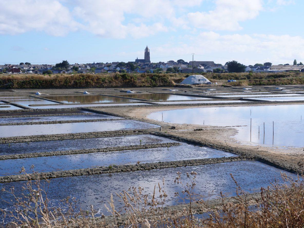 Les marais et la tour de Batz