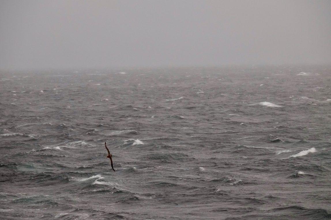 Au lever du jour au pied du Cap Horn un albatros s'amuse