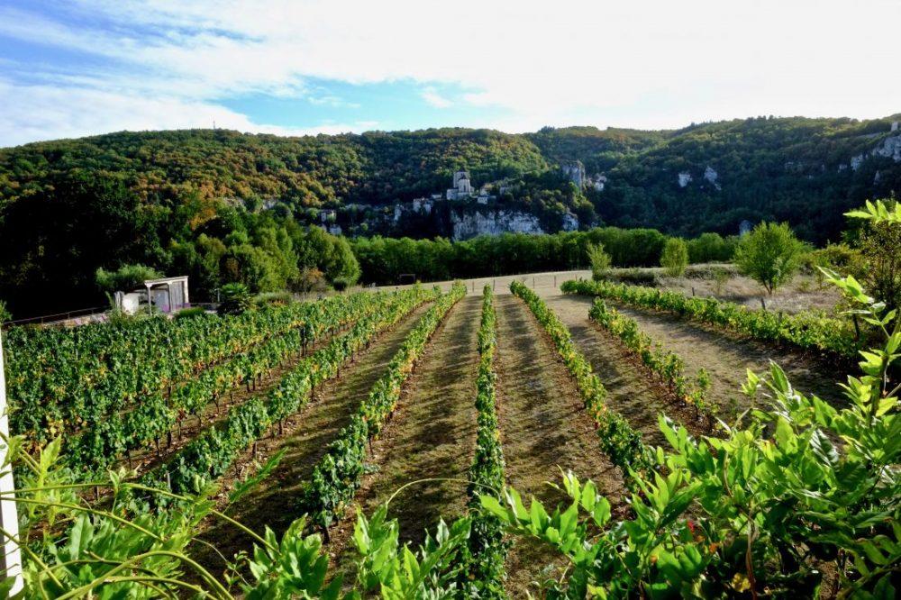 Une vue des vignes et de Saint-Cirq Lapopie dans les lointains
