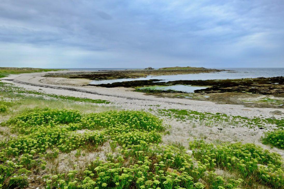 Les côtes préservées de l'île d'Hoëdic