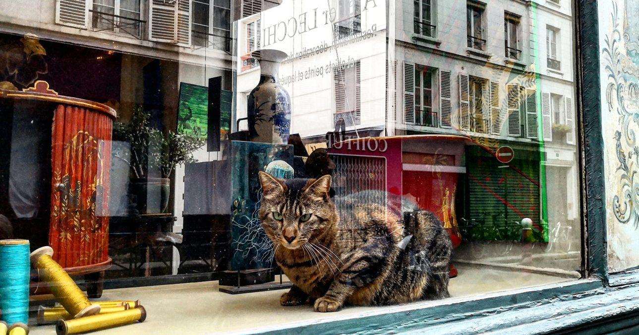 Réflections dans le onzième arrondissement de Paris