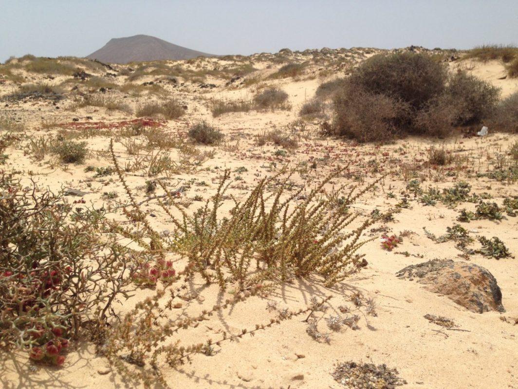 Les paysages arides de Lanzarote
