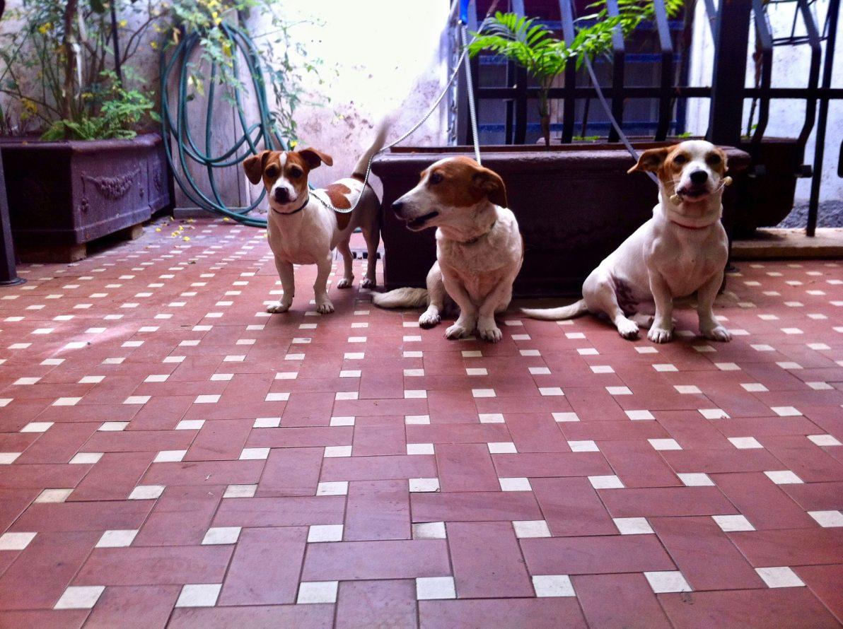 Trois petits chiens à l'heure du petit déjeuner