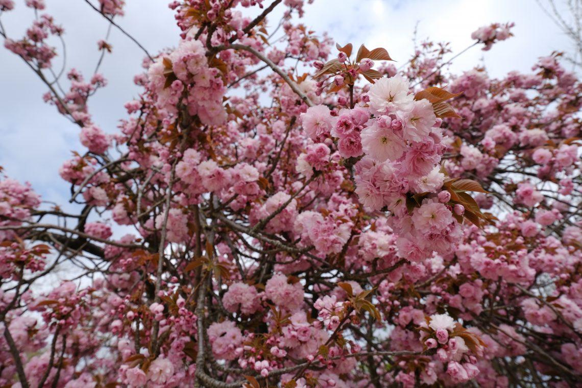 Le printemps est un moment crucial au jardin des plantes