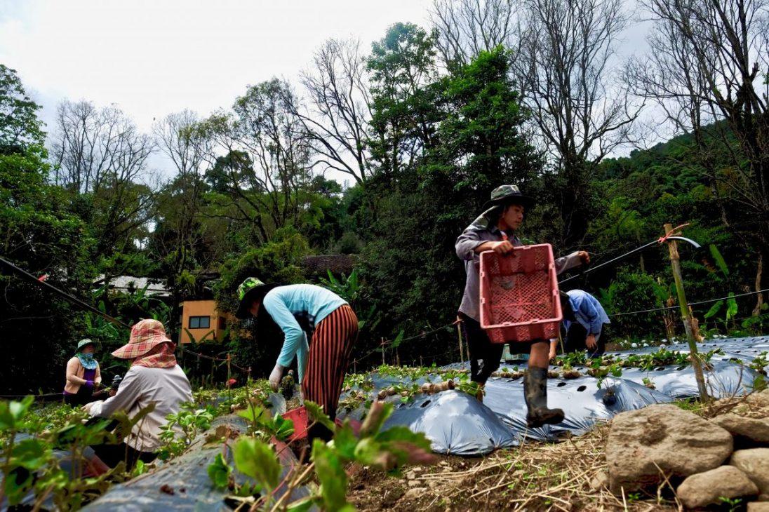 A la rencontre des agriculteurs du Nord de la Thaîlande