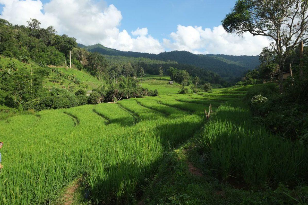 Dans le nord de la Thaïlande dans le parc national de Doi Inthanon