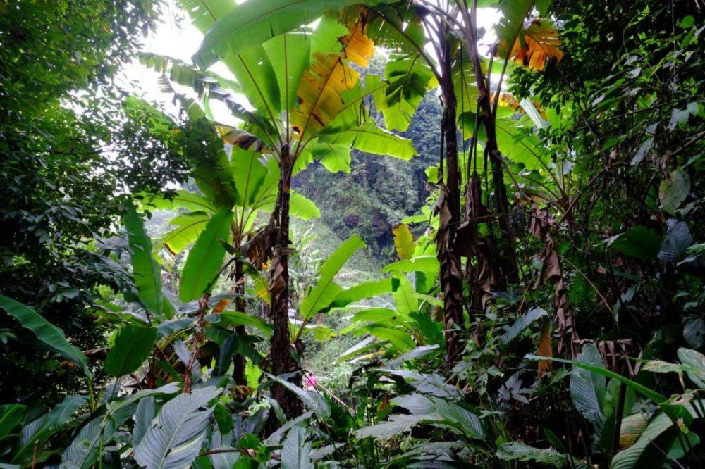 La randonnée de la montagne Kiw Mae Pan