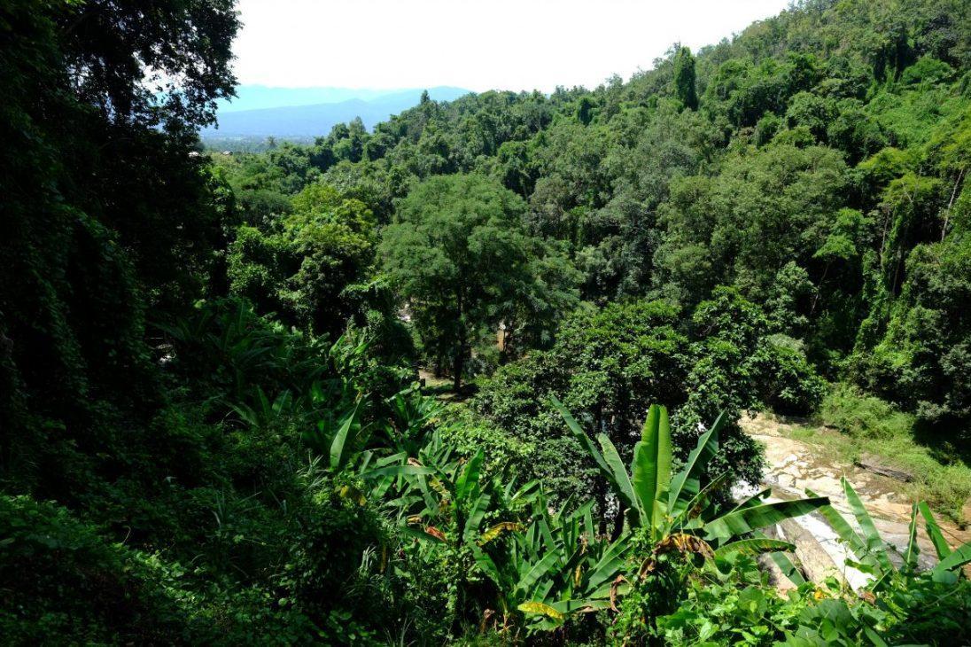 La vue sur la canopé et la forêt de Doi Inthanon