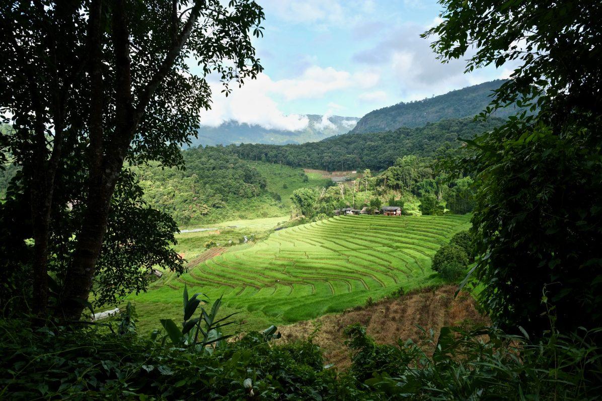Les rizières au lever du jour