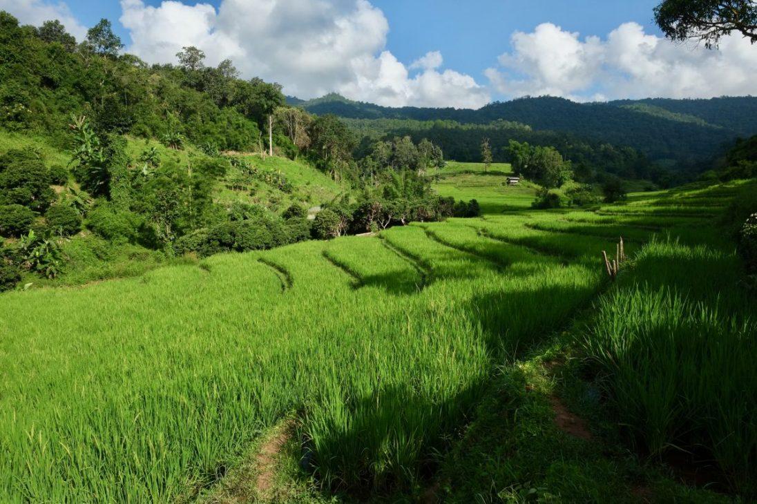 Les rizières en plateau à côté du petit village de Sob Haad
