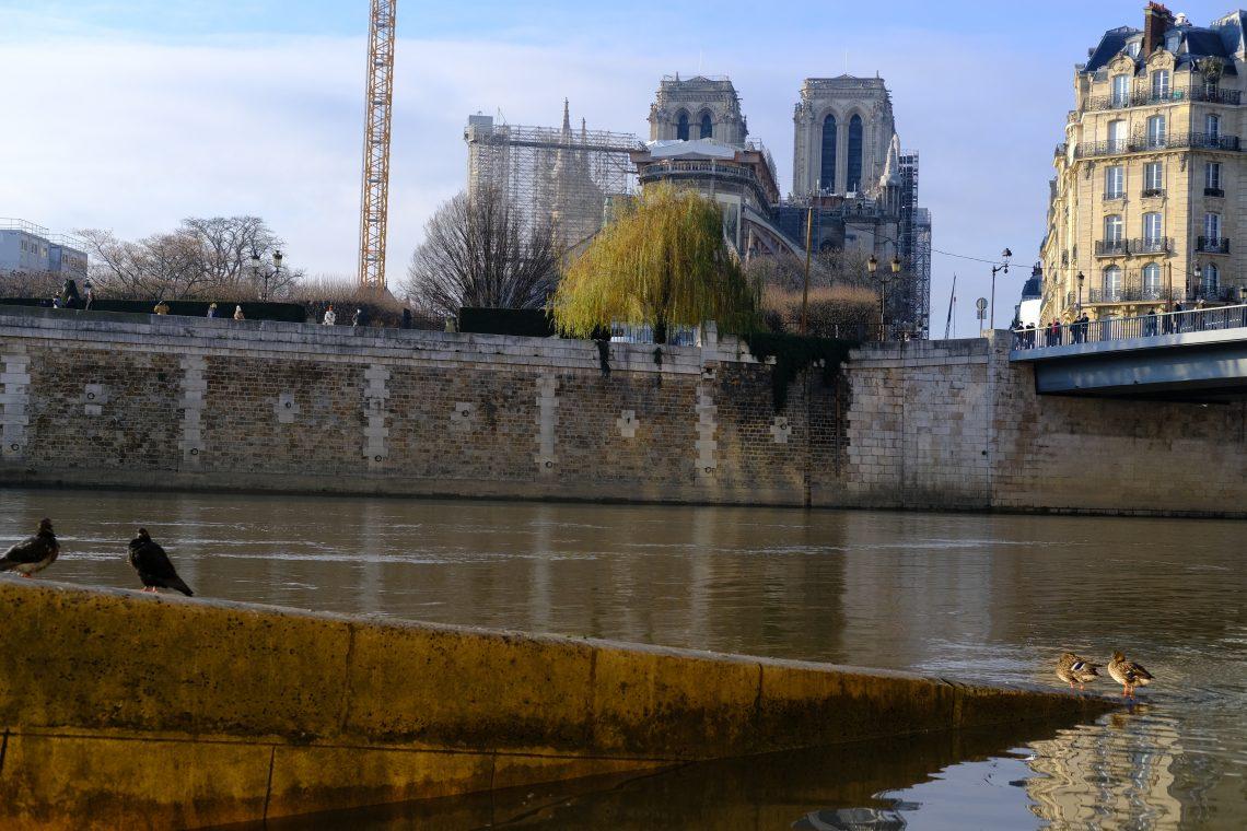 Quelques oiseaux avec Notre Dame de Paris en toile de fond