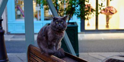 Un chat dans les rues de Paris