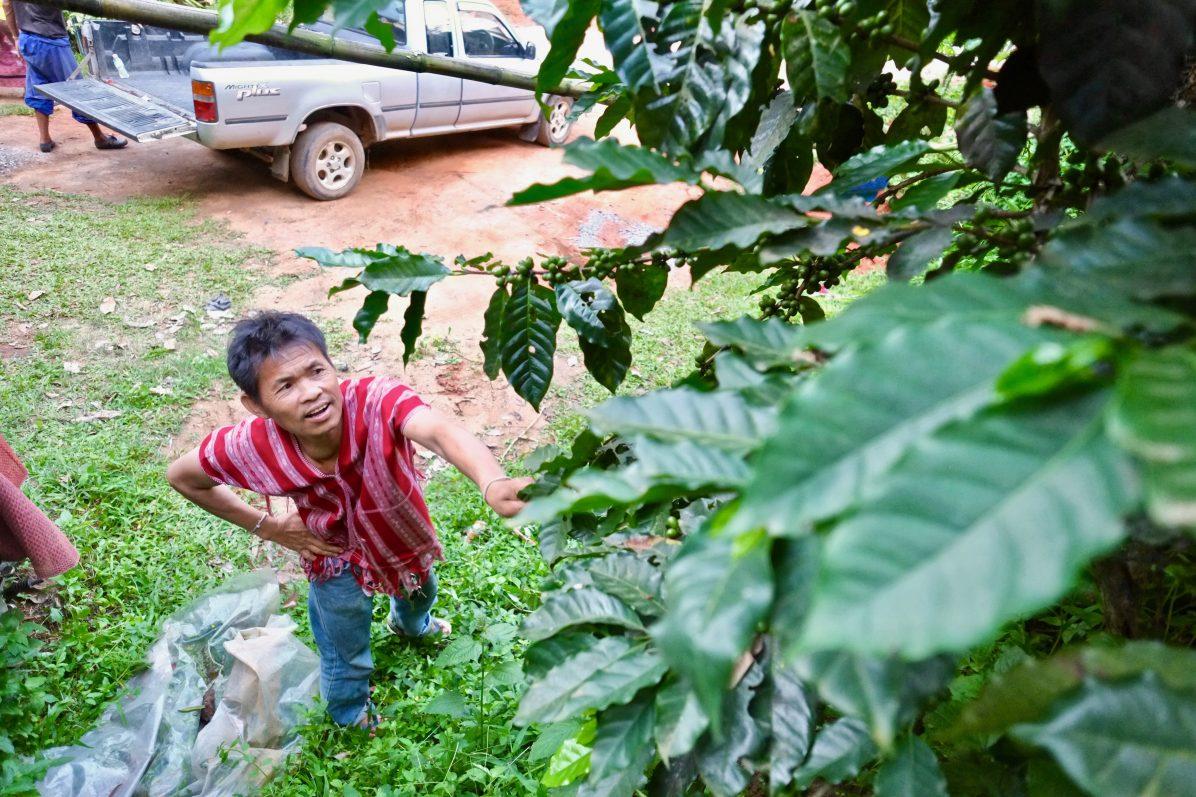 Un cultivateur de café examinant ses plants