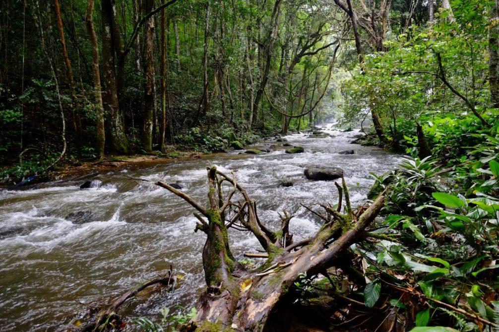 Une jolie rivière dans le grand parc de Doi Inthanon en Thaïlande