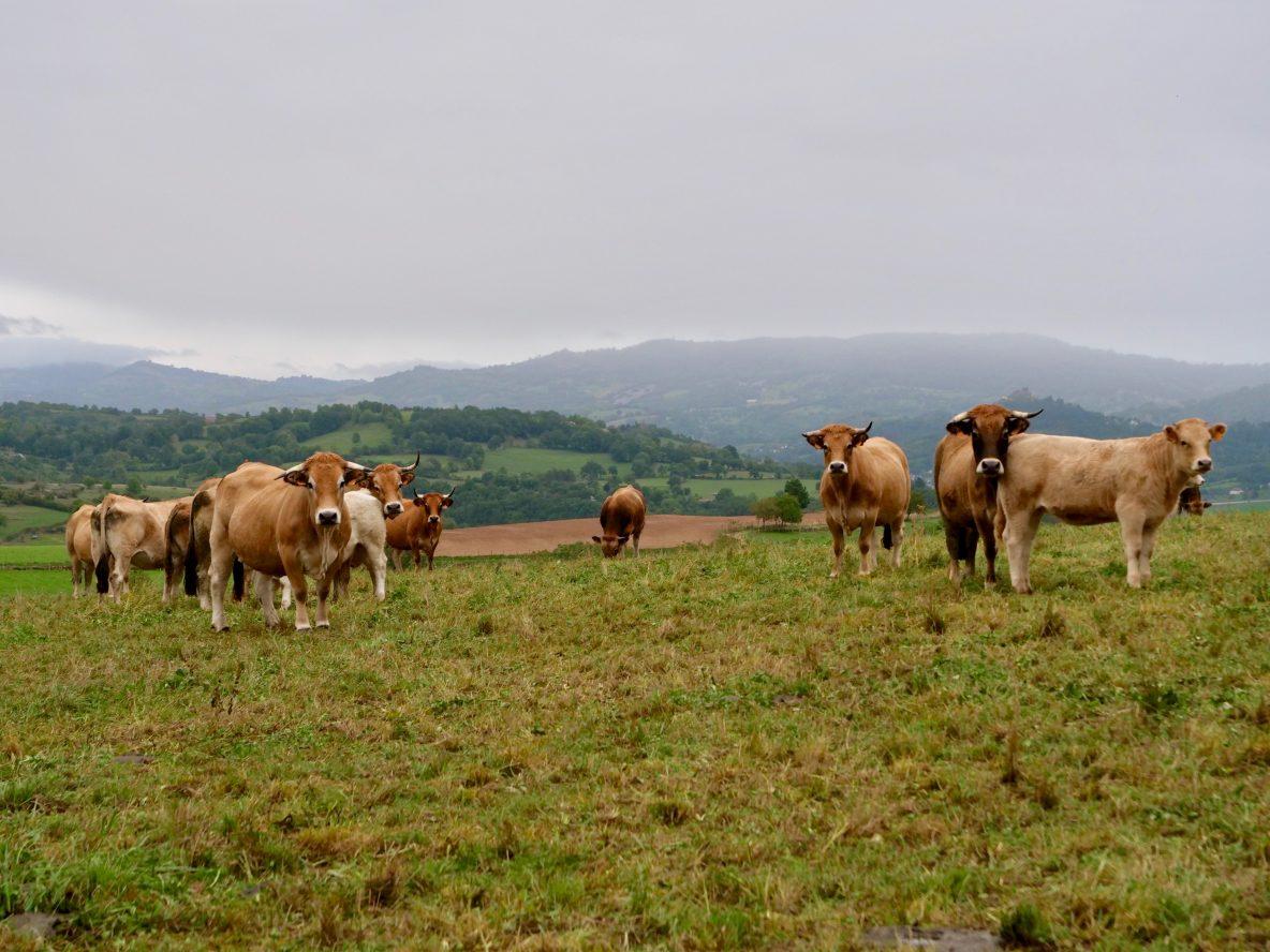 Sur les plateaux de l'Aubrac non loin du village d'Estaing