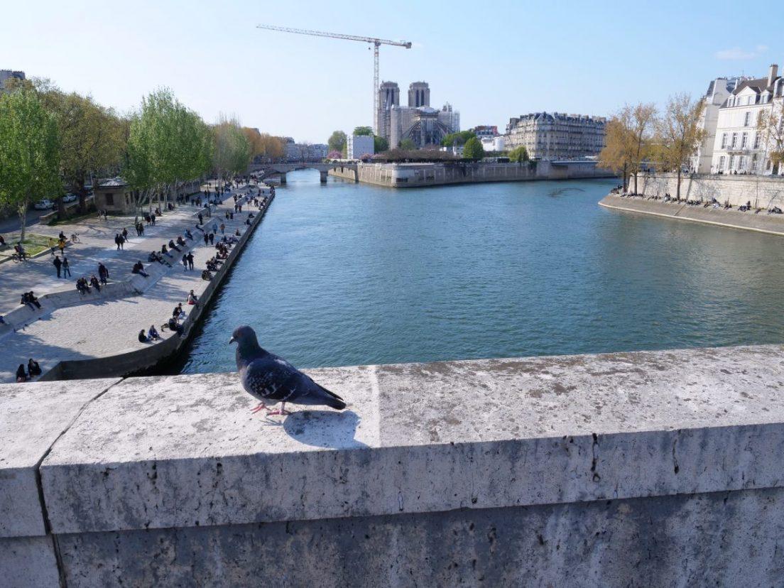 Un pigeon, la Seine et l'île de la Cité
