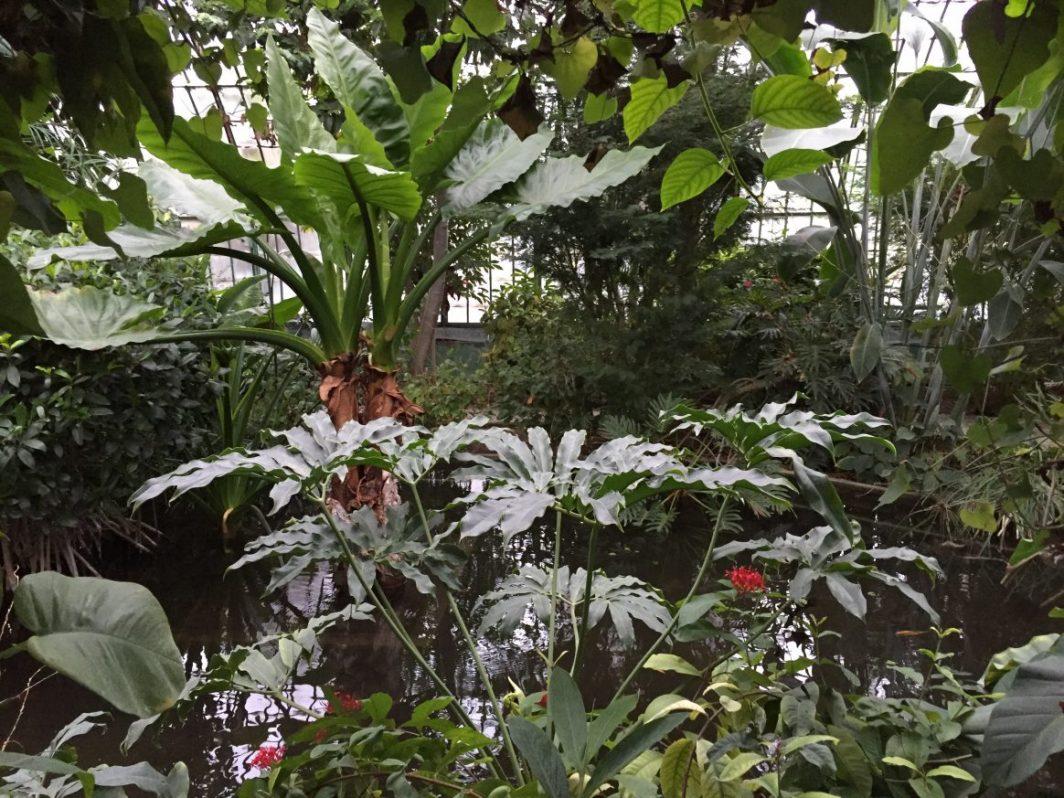 Une balade insolite dans les serres tropicales d'Auteuil