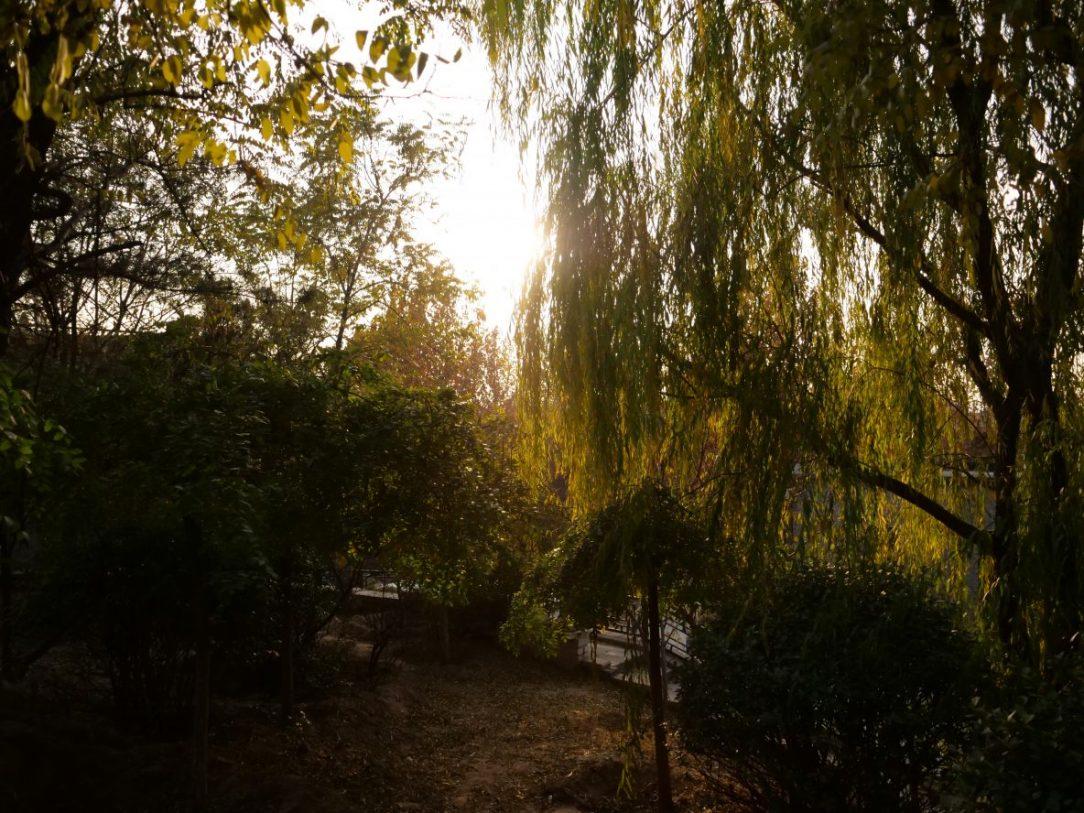 Un bol de nature en fin de journée à Songzhuang