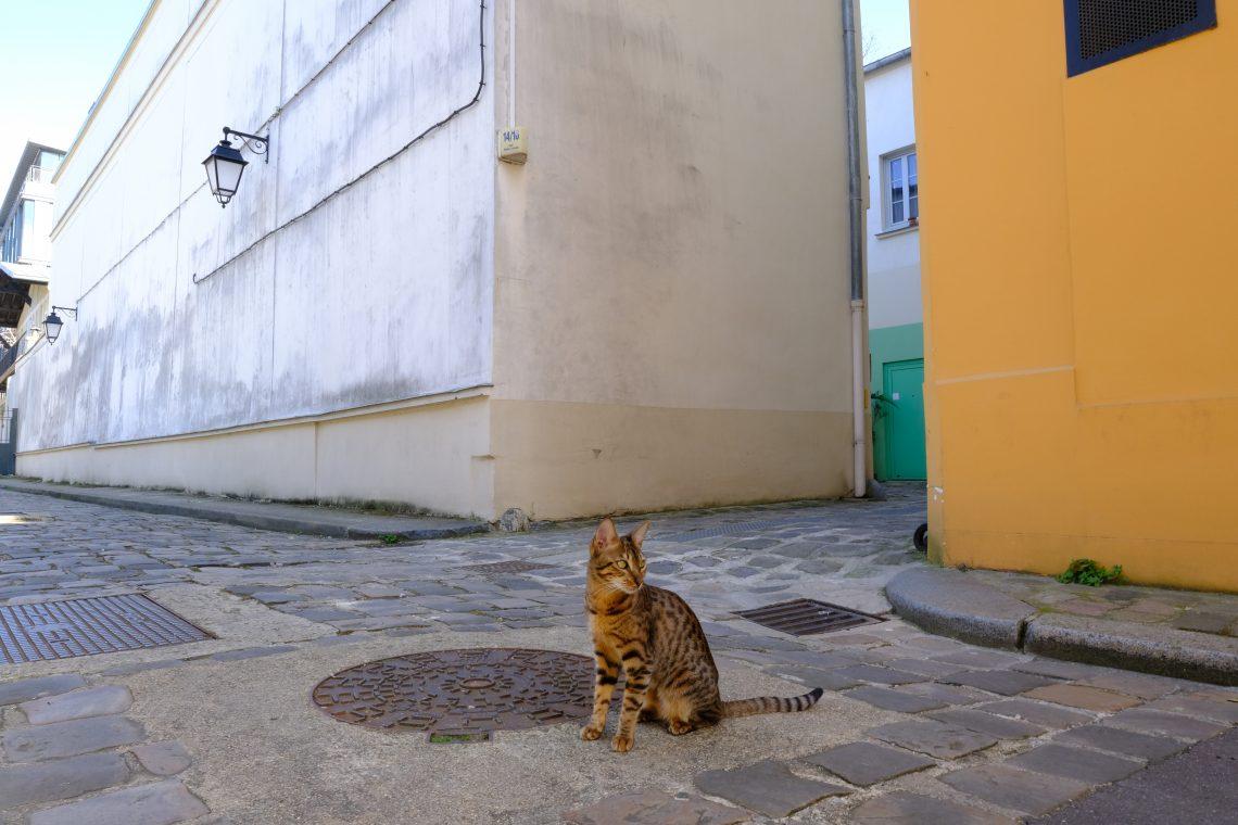 Un chat dans les petites rues colorées de Paris