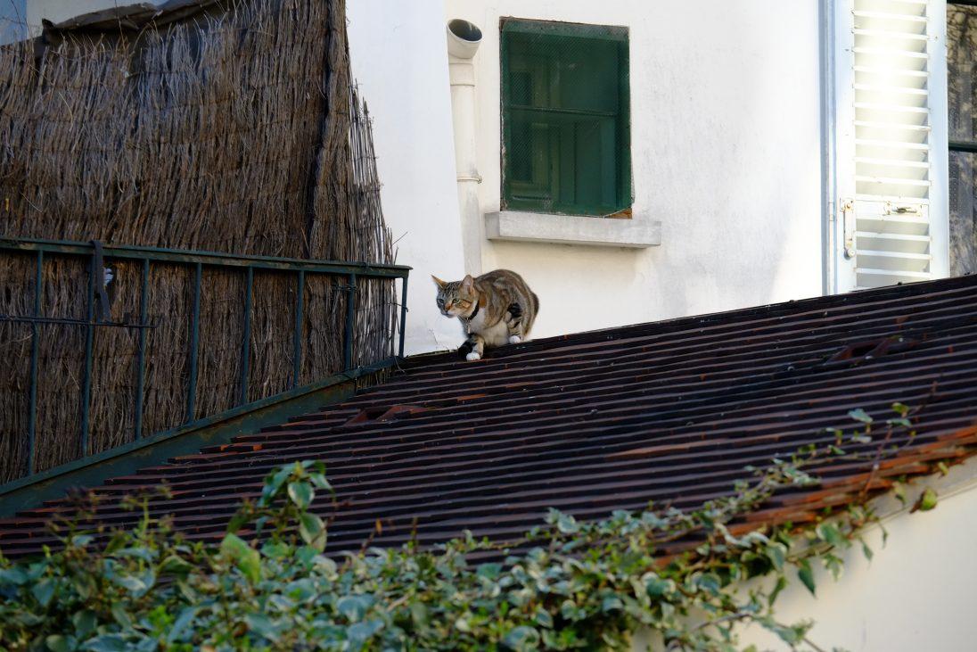Un chat parisien sur les toits de Montmartre
