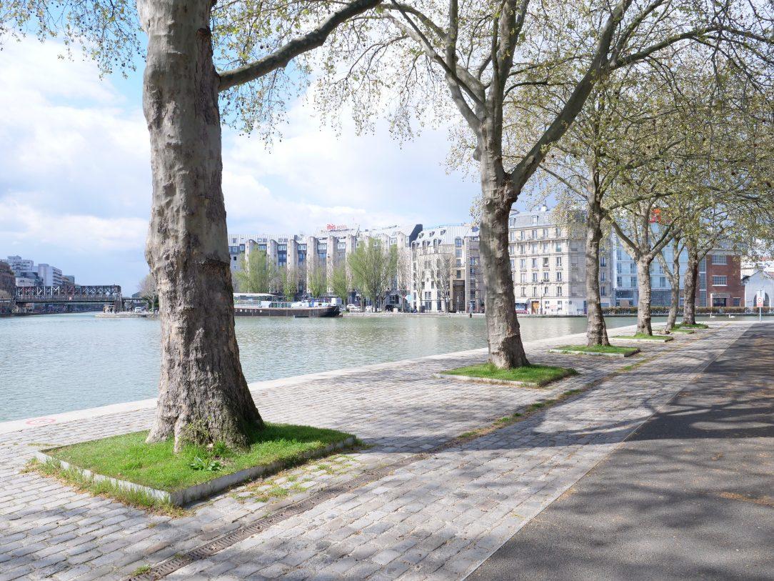 Quelques platanes dans le nord de Paris