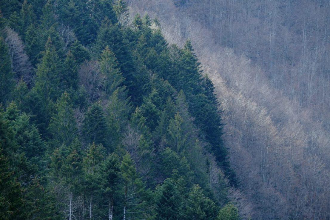 Les forêts dans les Alpes suisses, Engelberg