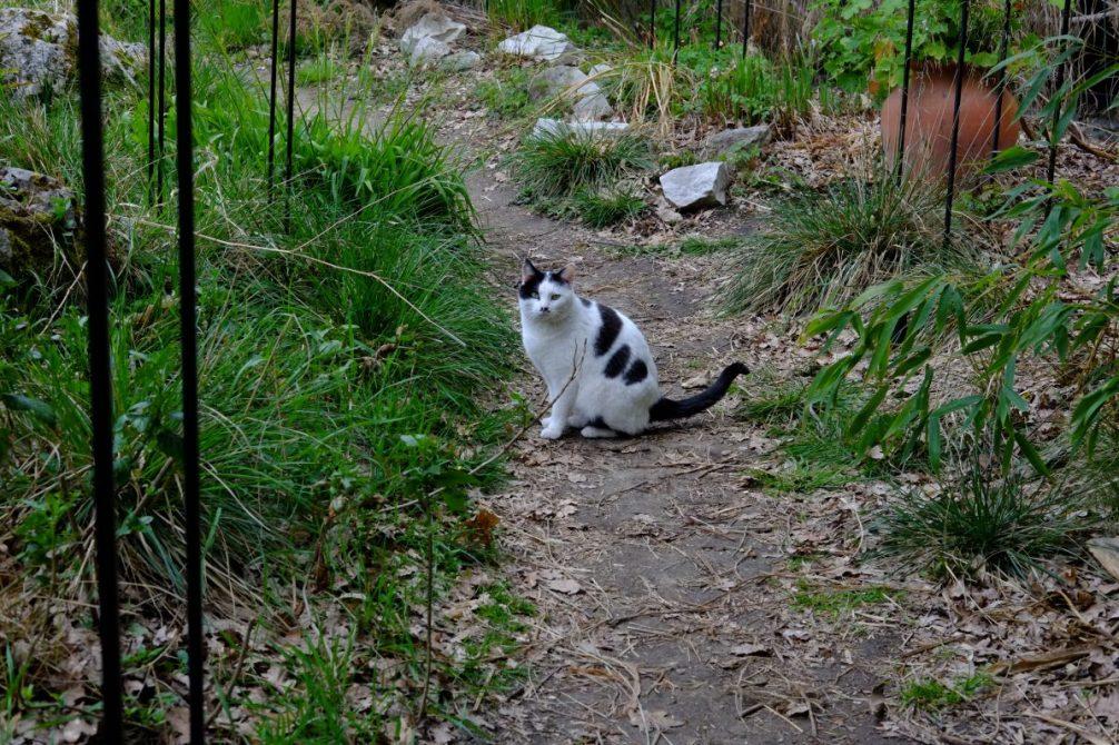 Un chat sauvage dans les petites allées du Parc Floral