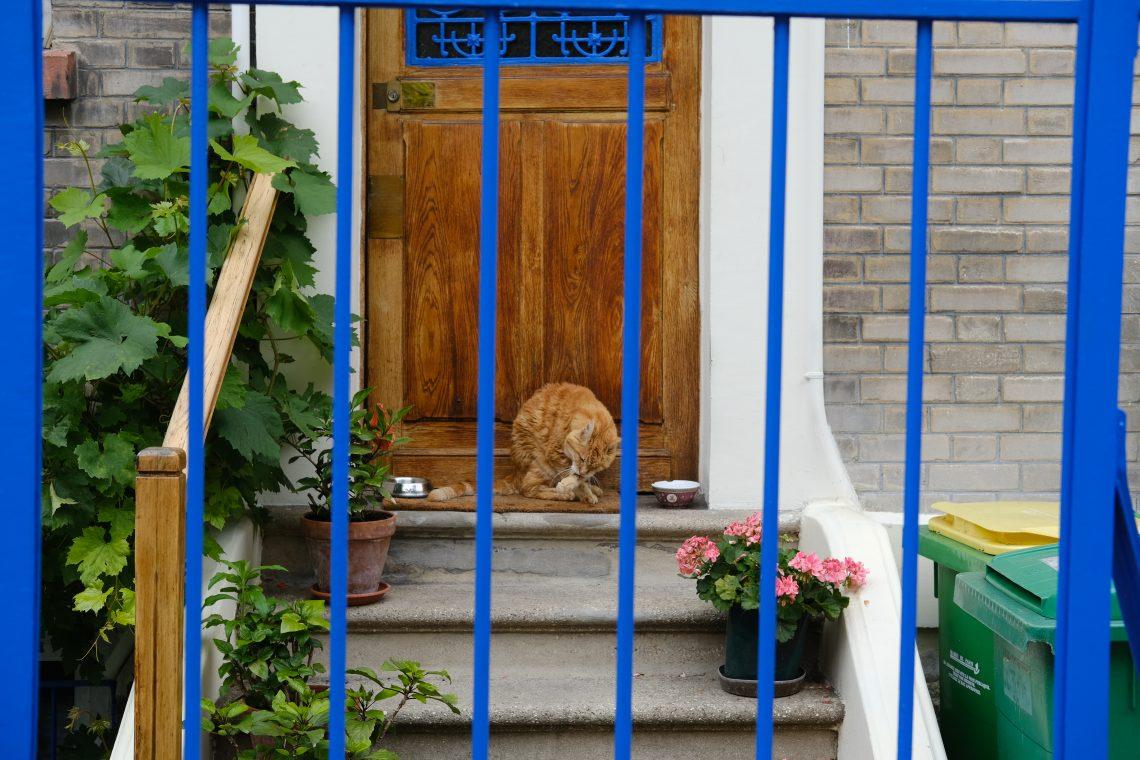 Un chat sur le pas d'une porte dans le 20 ème arrondissement de Paris