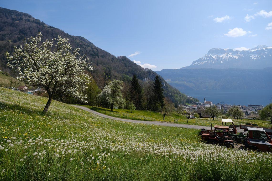 Une vue sur la ville de Gersau et sur le lac de Lucerne