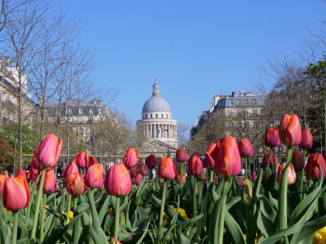 Quelques tulipes dans le jardin du Luxembourg avec le Panthéon en arrière plan, © Yann Vernerie