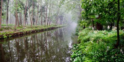 Une belle forêt humide dans la province de l' Anhui
