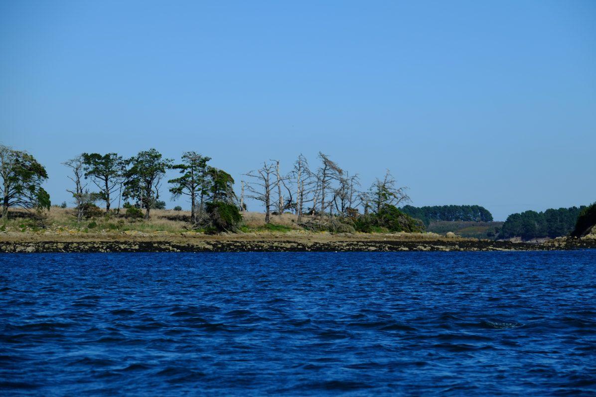 Une petite île dans le golfe du Morbihan