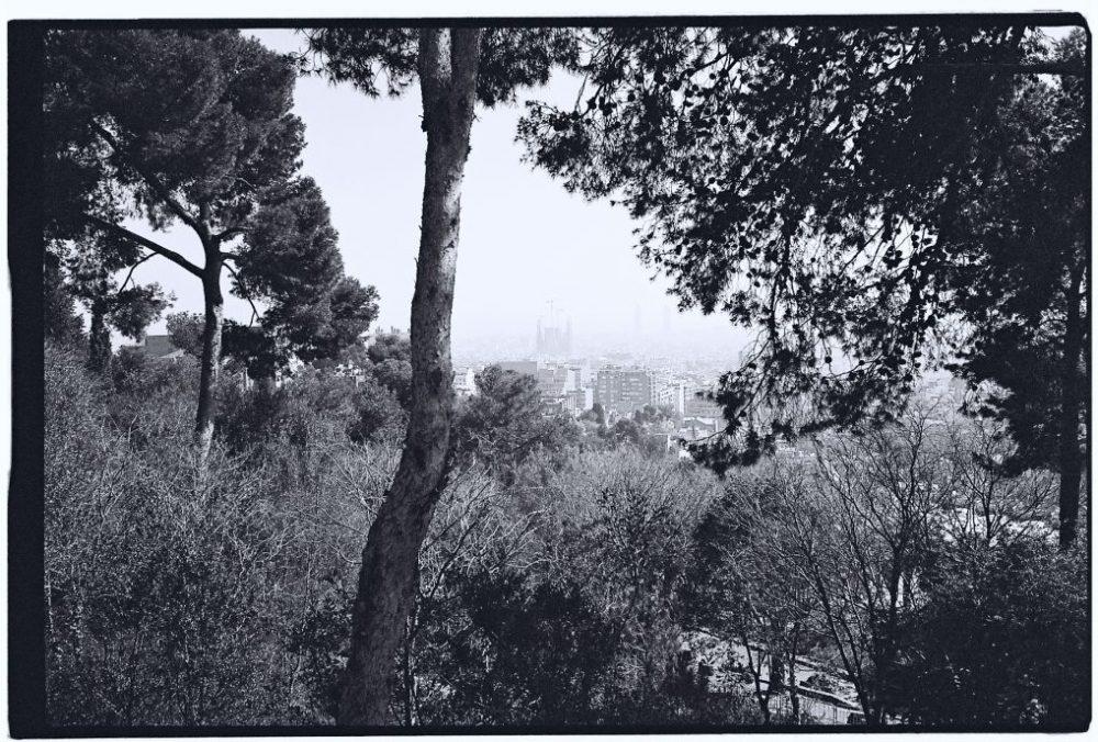 Une vue sur Barcelone à travers les arbres