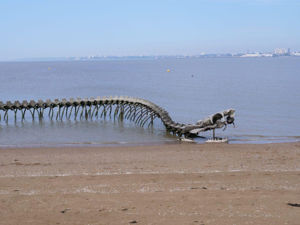 A mi-marée le serpent semble sortir de l'eau tel un reptile aquatique