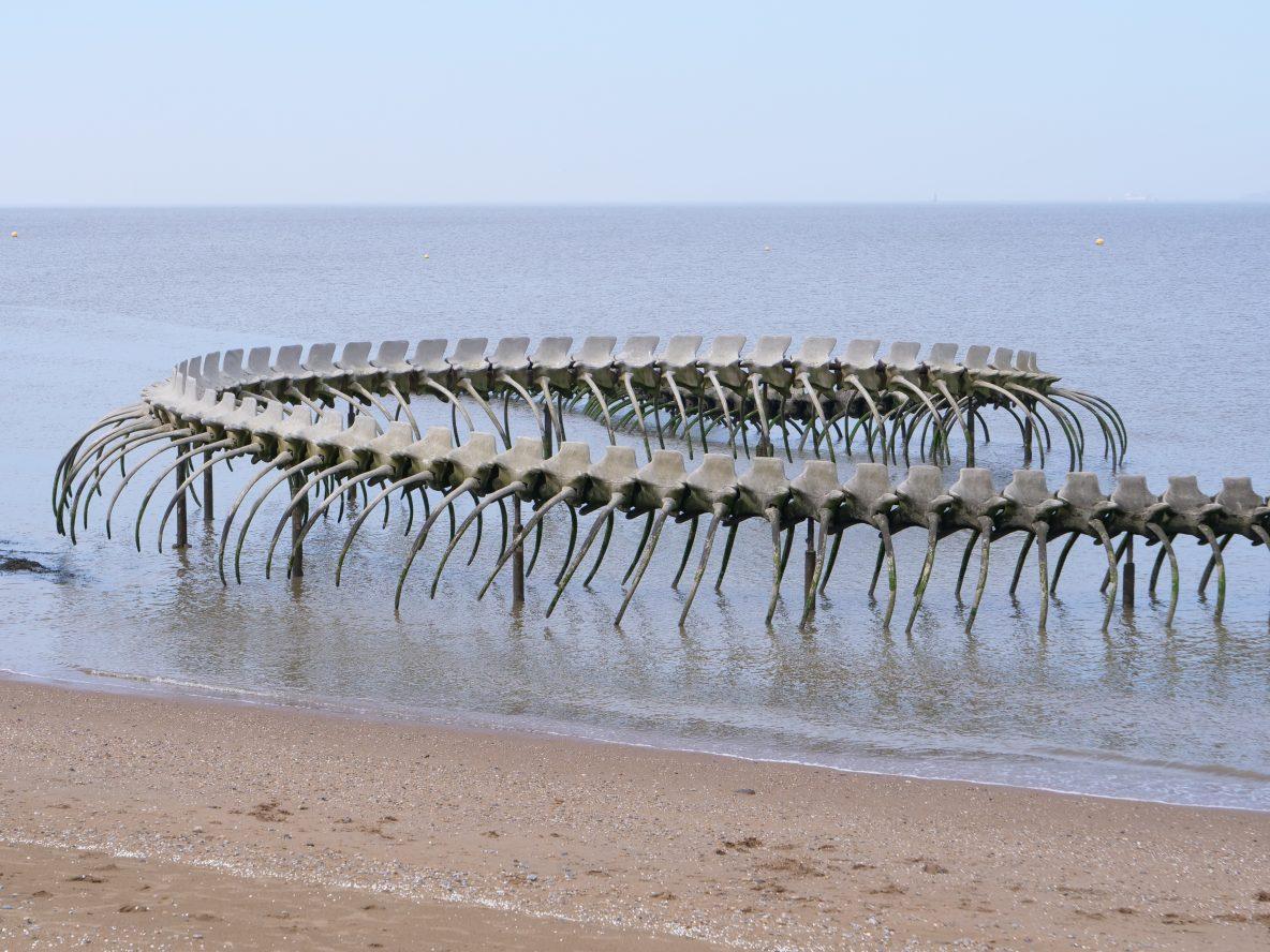 Les vertèbres du Serpent d'Océan de Saint-Brévin