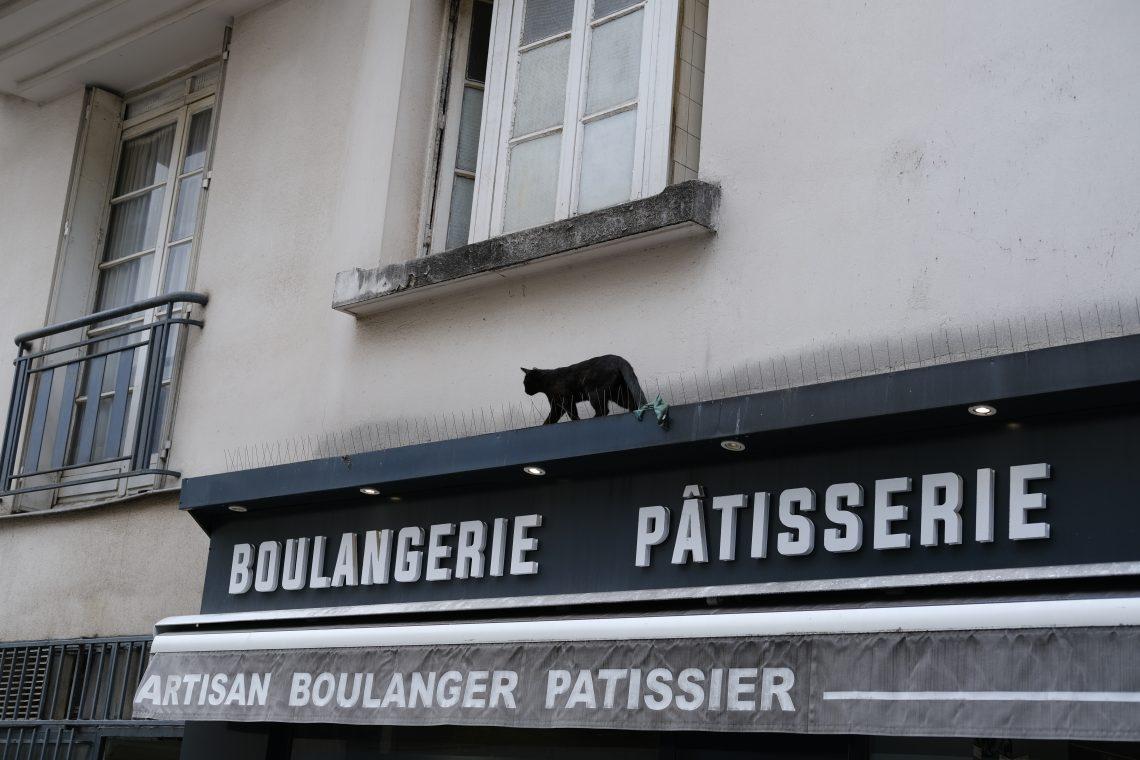 Un chat noir sur le rebord d'une enseigne d'un boulanger à Paris