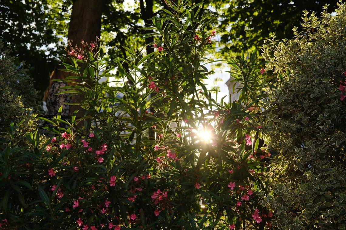 Un massif de fleurs et les derniers rayons du soleil sur la place Dauphine