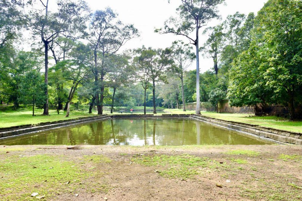 Les larges espaces au milieu d'une forêt dense et tropicale