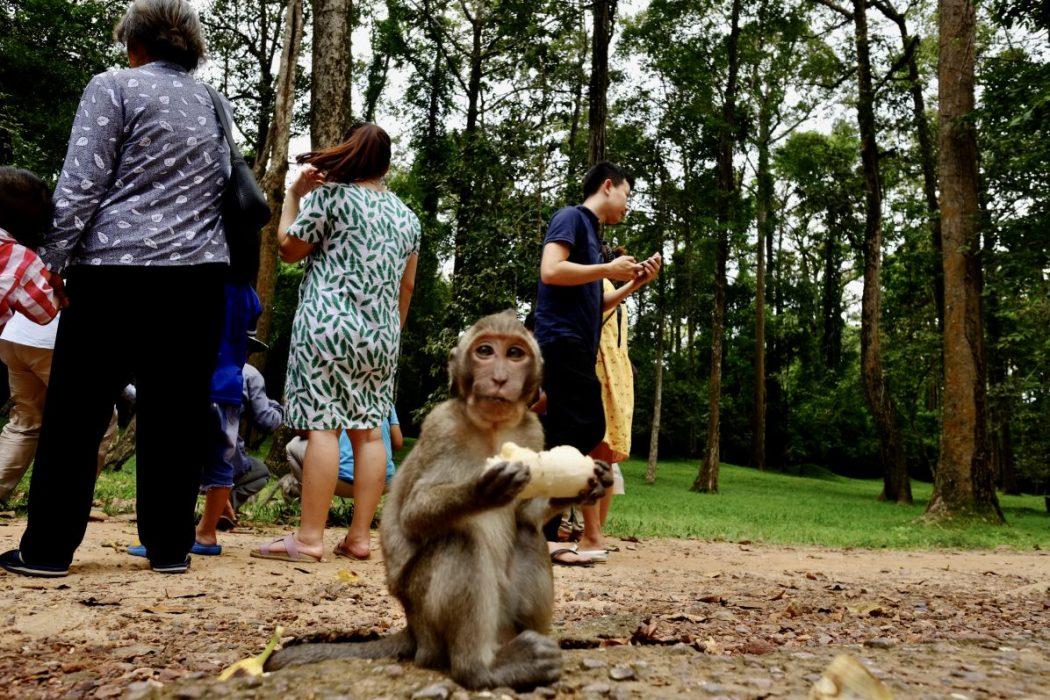Un singe mangeant une banane et quelques touristes chinois