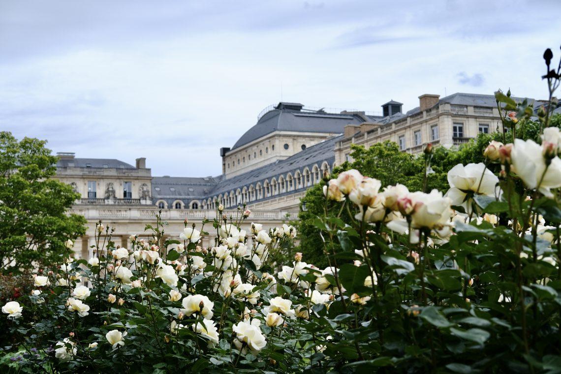 Au cœur de la roseraie avec une jolie vue sur les façades du Palais Royal