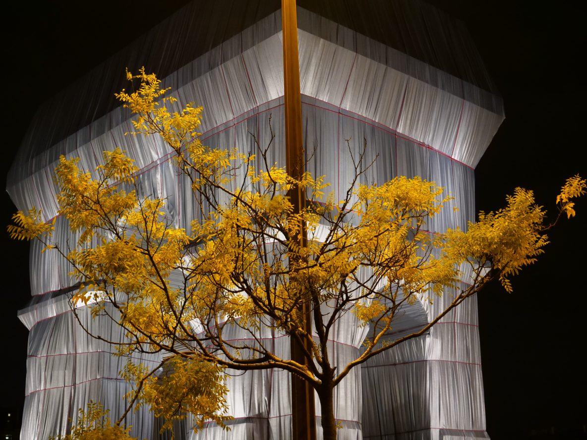 L'arbuste de l'arc de Triomphe