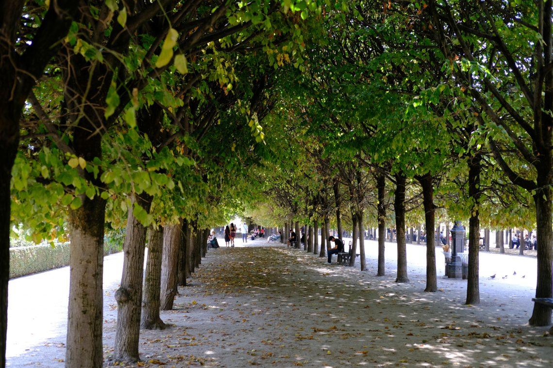 Les belles allées ombragées du jardin du Palais Royal