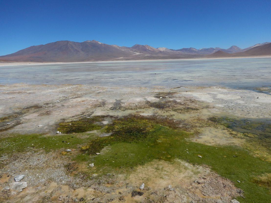 La Laguna blanca dans le Sud Lipez