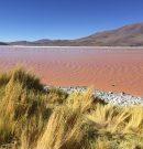 Les plus belles lagunes de Bolivie
