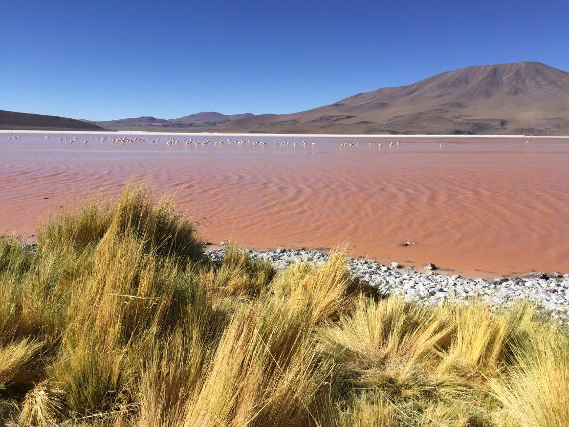 L'incroyable lagune colorée dans l'Altiplano bolivien